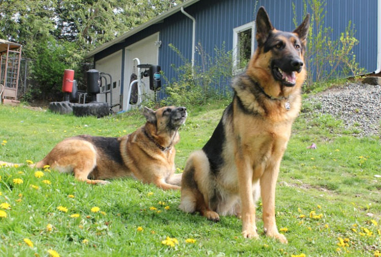 """Leo keeps watch while Mia """"woofs"""" for effect."""