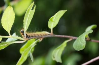 Fuzzy little caterpillar