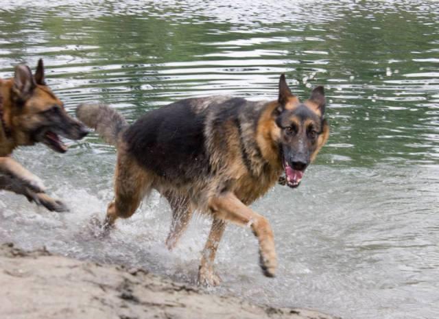 leo splash