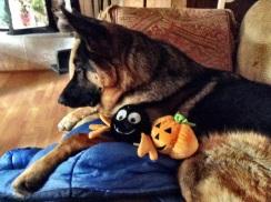Leo, bug and pumpkin