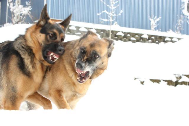 horror dogs