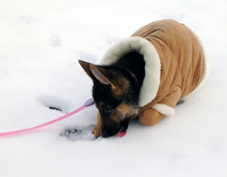 licking snow