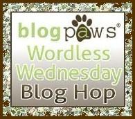 BlogPaws Wordless Wednesday Blog Hop