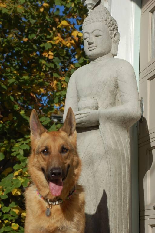 isis buddha (13)