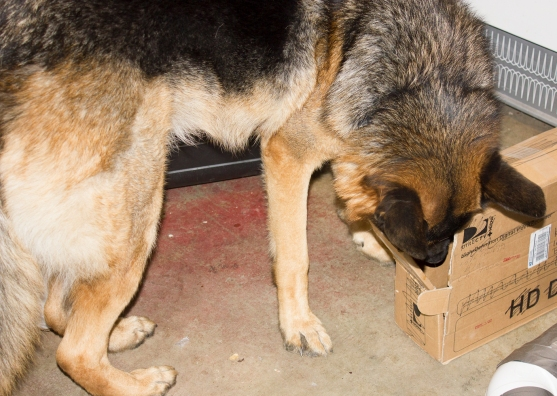 Leo's head in a box