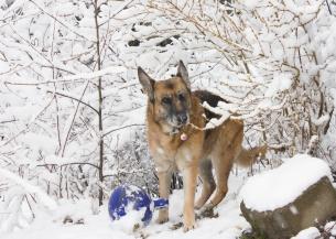 snow dogs_9