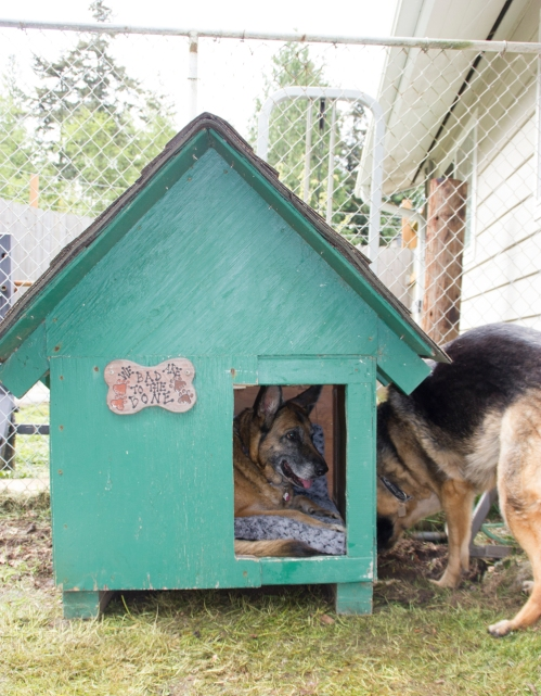 Leo demonstrated that putting a dog house on top of their digging patch is not exactly a deterrent. I say, give the dogs a place where they're allowed to dig.