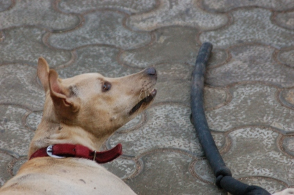 We saw this dog outside a movie theater in Mumbai.