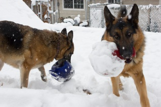 Jolly Snow Balls