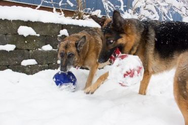 Jolly Snow Balls