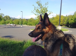 Leo's moment of calm, watching the action in the parking lot and skate park. (Also, Mia's butt.)
