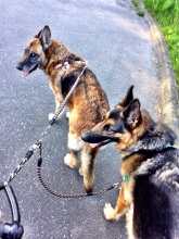 Doggies on the bungee leash