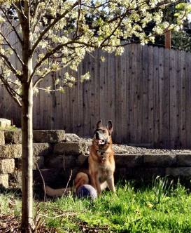 Mia and a Pear Tree