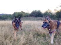Search doggies