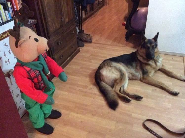 Leo and the reindeer