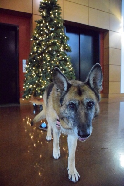Christmas Mia