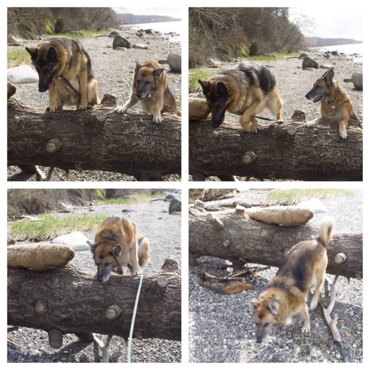 Leo shows Mia how to jump a tree