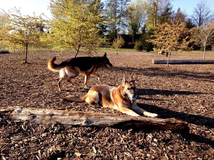pups park
