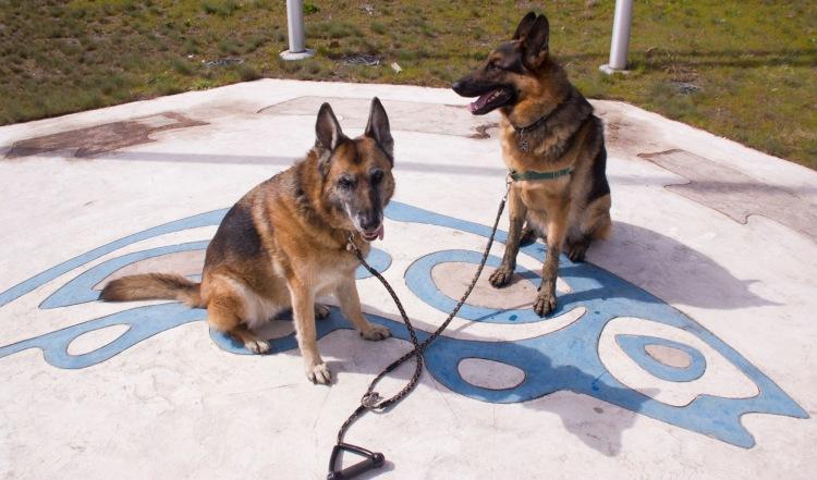 Doggies in tandem