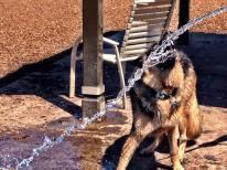 Leo gets hosed