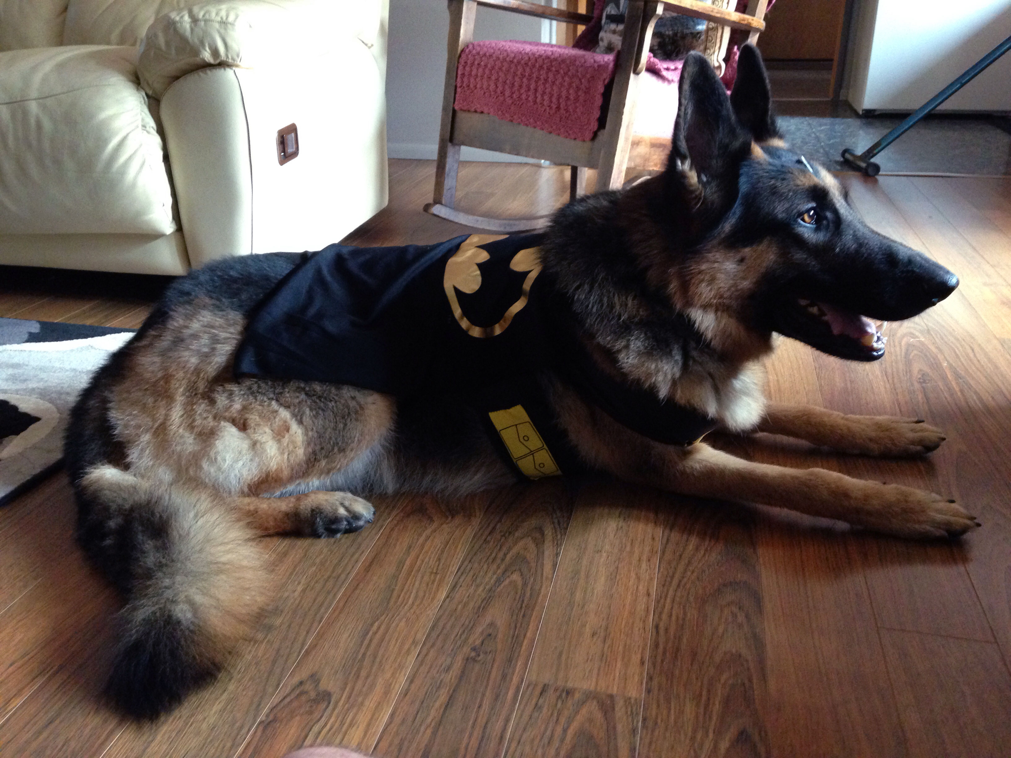 The Dog Knight Rises | Kari Neumeyer ~ Rhymes with Safari