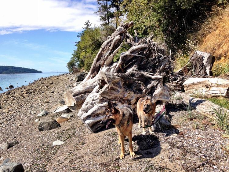 dragonwood-dogs