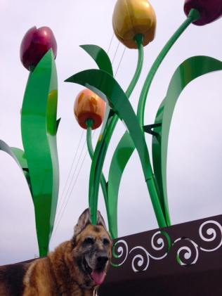 Sprouting Tulips