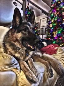 Leo painted with the SuperPhoto app