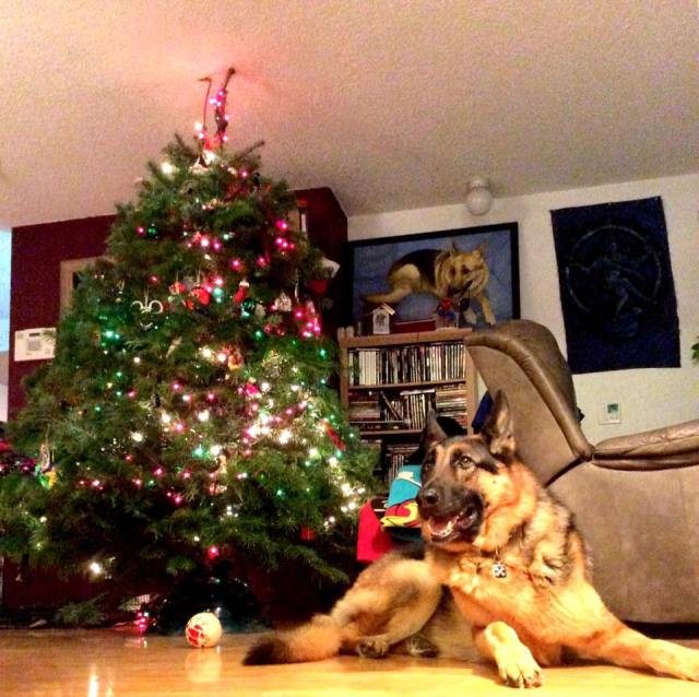 Leo and the tree
