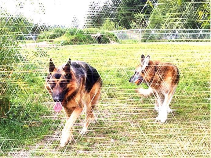 Sparkle Pups