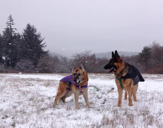 Snowy Crime Scene Field